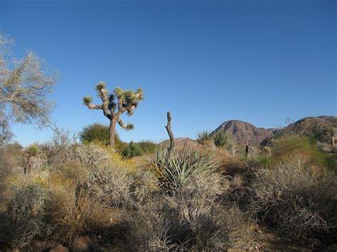 Palm Desert – Travel guide at Wikivoyage