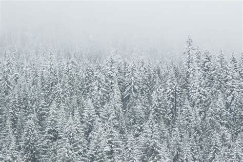 Free picture: snowflake, frost, winter, snow, frozen, cold