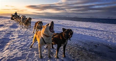 Dogs & the Ocean – Along the Arctic coast by dog wagon